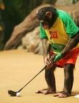 Golfing20anyonethumb_1